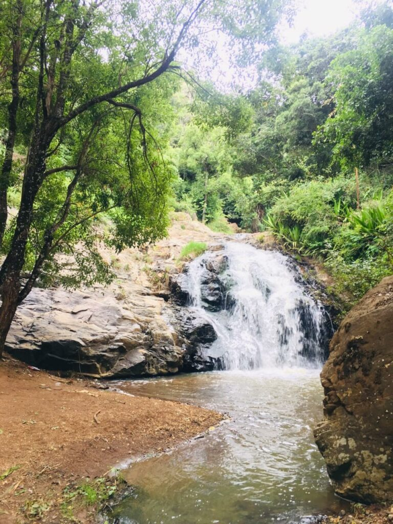 Ooty Jungle Stay